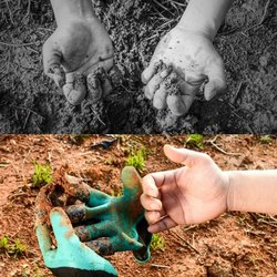 Green Gardening Gloves, Size: Medium