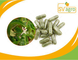 Private Label Andographis Extract Capsule