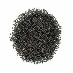 EVERPIK 99% Black Mustard Seeds, Packaging Size: 500 Gram-1 Kg, Packaging Type: Plastic Bag