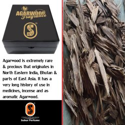 Agarwood Apari.SP-021