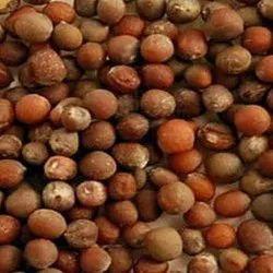Dried Organic Cauliflower Seeds, Packaging Type: Pp Bag, Packaging Size: 1kg-5 Kg