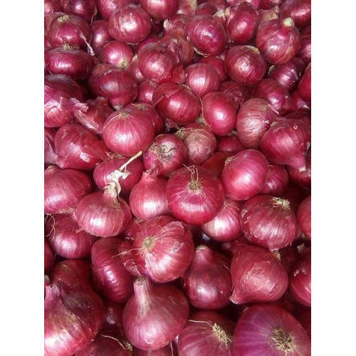 FRESH ONION - Fresh White Onion Exporter from Surat