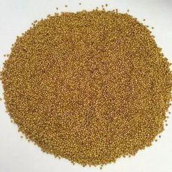 BL1 Berseem Seed
