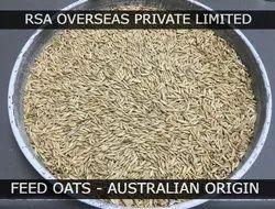 RSA OVERSEAS Feed Oats Australian Uncrushed, 9.7%, 50 Kg Bags