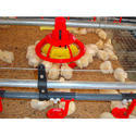 Plastic Poultry Feeder
