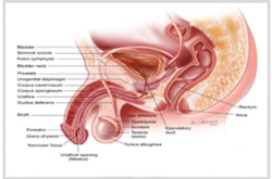 Urology Treatment