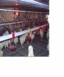 Battery Pullet/Grower cum Chicks Cage