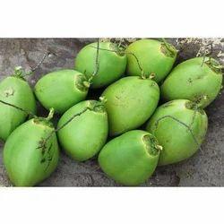 Organic Tender Coconut