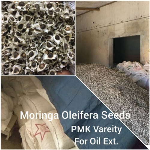 Moringa Oleifera Seeds (for Oil)
