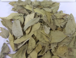 Senna Leaves, Packaging Size: 100 Kg