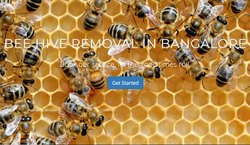in Home Spray BEE HIVE REMOVAL SERVICES