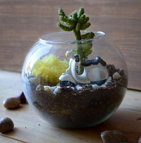My Bageecha Service Provider Of Floating Grasslands Terrarium Kit