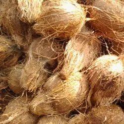 A Grade Pollachi Semi Husked Coconut, Coconut Size Available: Medium