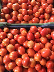 Fresh Export Quality Tomato