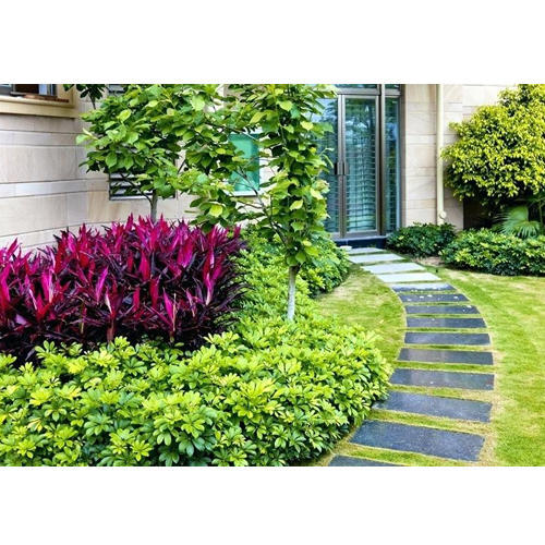 Ground Covers Plants