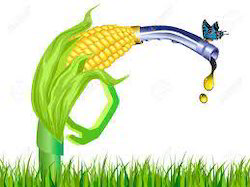 Ethyl Alcohol from Corn Project Reports