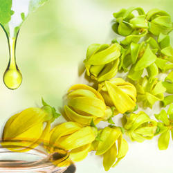 Absolute Ylang Ylang  Essential Oil