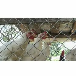 Poultry Chain Link Mesh And Barbed Wire
