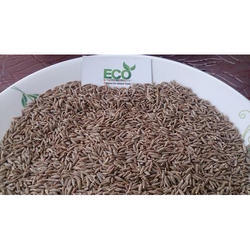 Fresh Crop Cumin Seeds