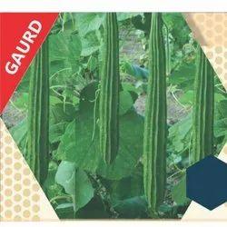 Sunaina-F1 Ridge Gourd Seeds