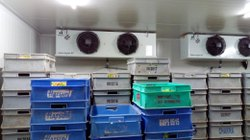 Solar Powered Cold Storage Room