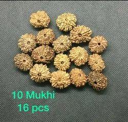 10 Mukhi Nepali Rudraksha