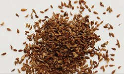 Carrot Organic Seed