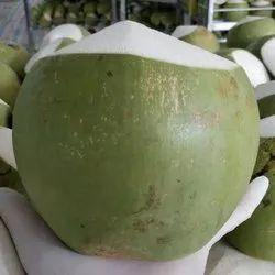 Coconut in Delhi, नारियल, दिल्ली - Latest Price