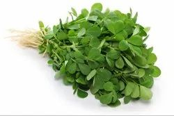 Methi Herbal Extract (Oil Soluble)