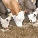 Cattle Feed Testing Services