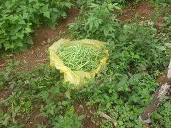 A Grade Green Cherries Beans Fresh From Kodaikanal Hills, Gunny Bag, 61