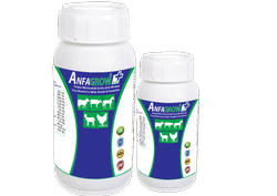 Swine Growth Promoter Liquid (Anfagrow Plus)