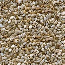Certified Sesame Seeds, For Agriculture, Packaging Size: 500 Gm