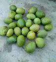 Mango  42 Rupay Kg Hai