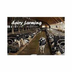 Dairy Farming Consultancy Service