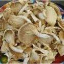 Dried Oyster Mushroom Spawn