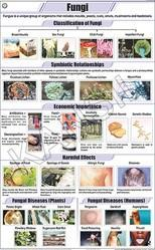 Fungi For Botany Chart