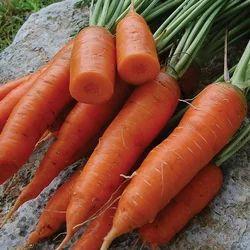 Fresh Carrot, Packaging: 5 - 50 kg
