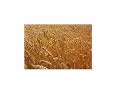 Wheat Careals