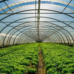 Poly Greenhouses Film