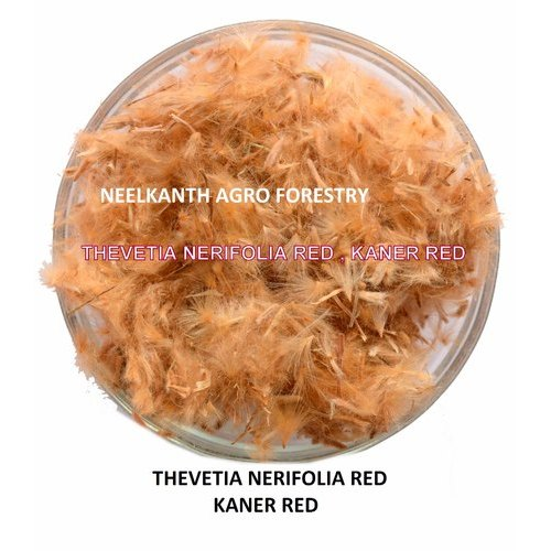 Neelkanth Agro Nerium Oleander Thevetia Neriifolia Red Kaner Red, For Agriculture, Packaging Size: 1 Kg