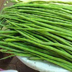 Maharashtra Green Fresh Drumstick Vegetable, 5 Kg, Moringa Oleifera