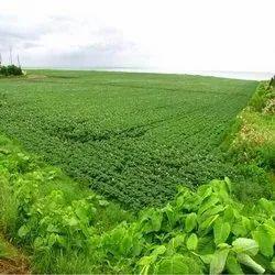 Agriculture Land Dealing Service, Size/ Area: 3 Acre 80 Gunta
