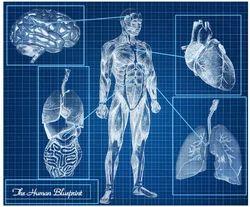 Diagnostic Imaging Services