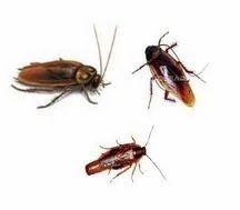 Cockroach Management