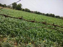4 Bigha Agriculture Land at Express Highway Jaipur