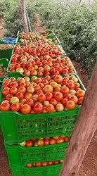 A Grade Red tomato, Crate