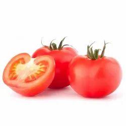 Hybrid Tomato PS-404 F1