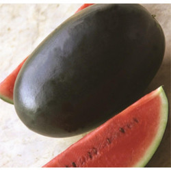 Black Queen Watermelon Seeds
