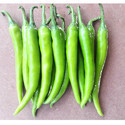 Green Chilli Oracle Seeds